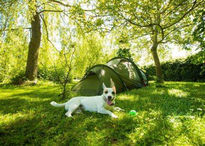 Met je tent Kamperen in de tuin - Relax @ Maison Sax